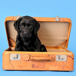 Quais os procedimentos para viajar com o seu animal