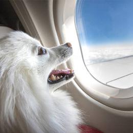 Dicas para viajar com o seu pet